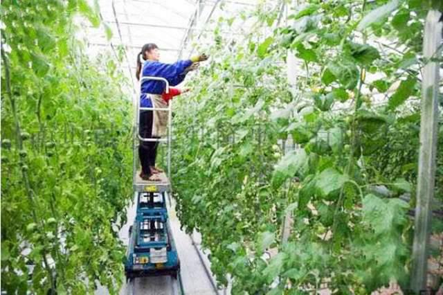 自行采摘蔬菜水果升降机